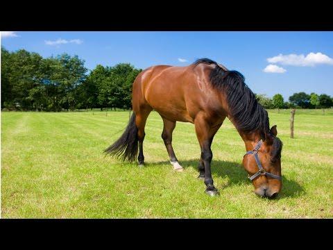 Clique e veja o vídeo Curso Alimentação de Cavalos