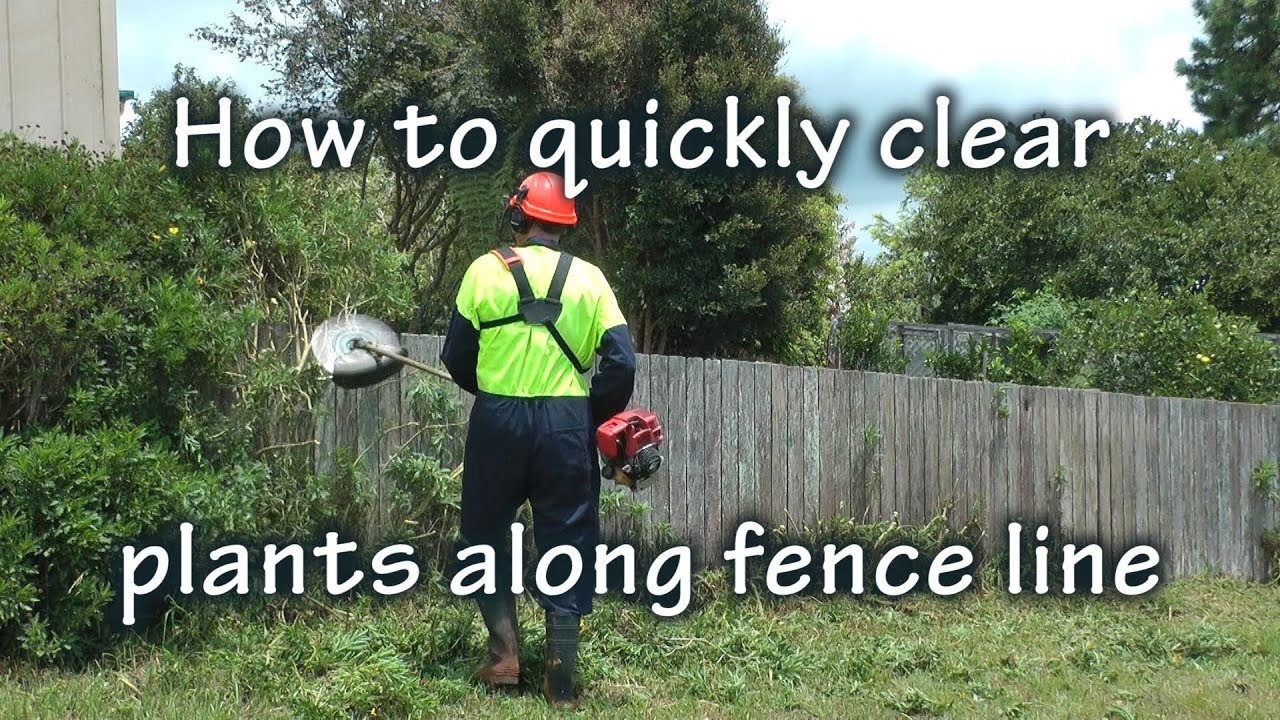 how to clear grass around a new tree for mulch