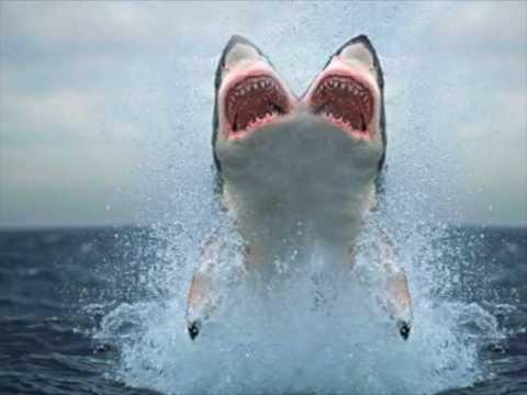 0 Maior Megalodon tubarão no mundo