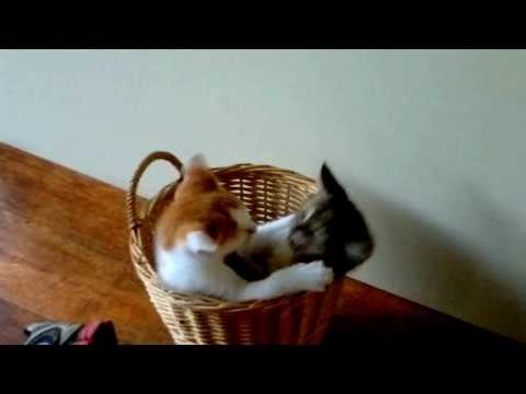 gekke kittens