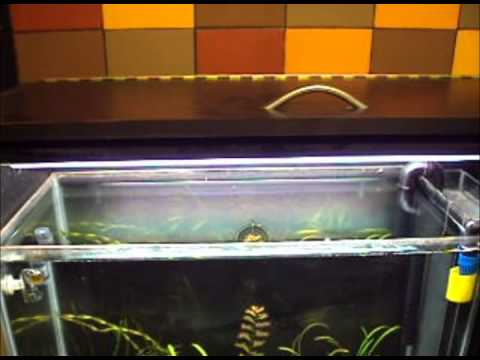 Filtro y mueble hecho en casa para acuario plantado youtube for Mueble para acuario