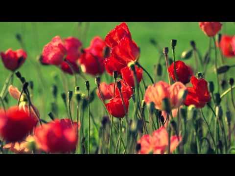 Miral Flower
