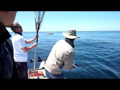 Bodega  Fishing Report on In Bodega Bay Chasing The Pink Views 2522 Rating Ratings