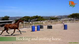 Liberty: how to catch horse? How to stop your horse, change direction and invite.