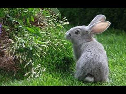 Жуки - Про зайца