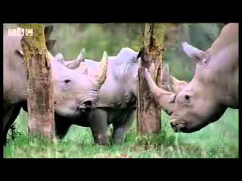 animal mating rituals in the african jungle   just b.CAUSE