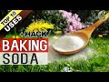 BAKING SODA IN GARDEN | TOP 10 Uses of Baking Soda Hacks in Gardening and Plants