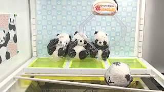Toreba Win! Thank You Panda - Medium-Big Plushy A