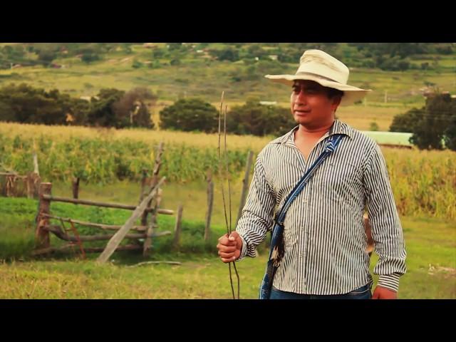 Grupo soberano de Tierra Mixteca - El Novillo Despuntado