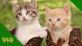 The Funniest and Most Humorous Cat Videos Ever! - Funny Cat Compilation - Funny Pet Animals Fails