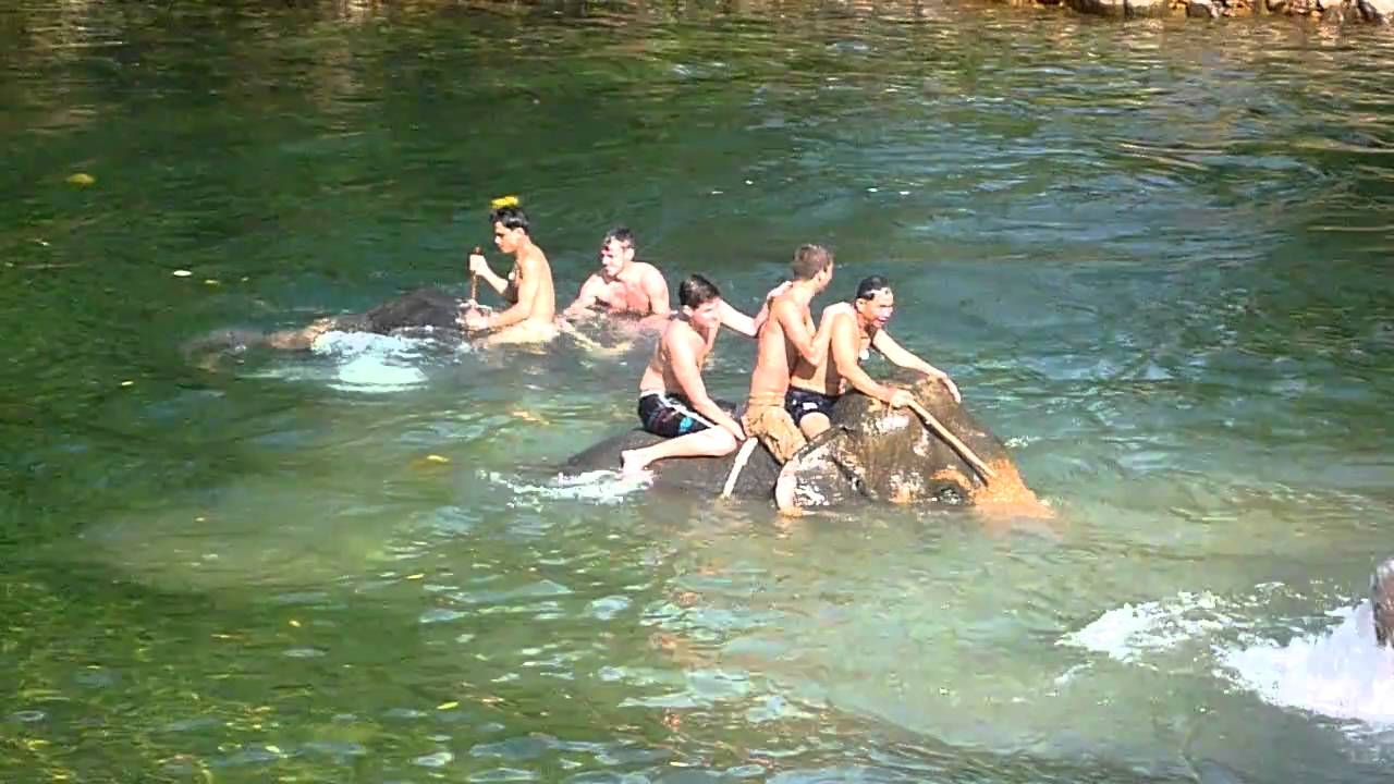 Swimming With Elephants Thailand Riding/swimming With Elephants