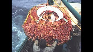 Awesome Snow Crab Fishing On The Sea, Big Catch King Crab Trap Under Deep Sea