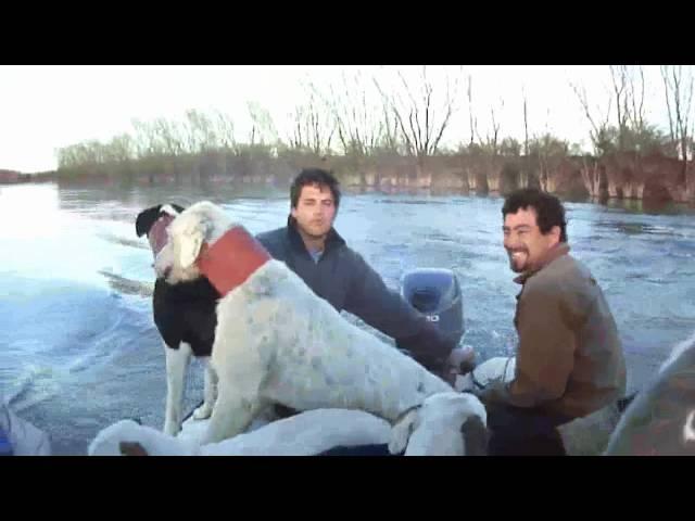 Caza del Jabali con perros y cuchillo - costa del Rio Negro