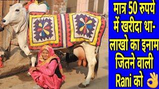 👍कभी 50 रुपये में खरीदी थी, आज चैंपियन बन, जिताये लाखो👍.RANI - Champion Haryana Breed Cow👍.