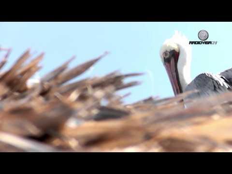 NATGEO en GUAYMAS - Las Granjas más raras del mundo