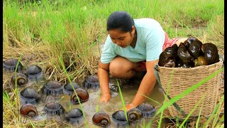 Find and Cooking Big snail in forest - Collect Snail Cooking  Eating delicious