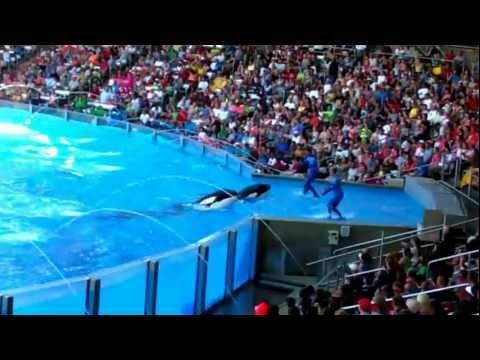 Seaworld Orlando 'One Ocean' Shamu Show 2012 HD