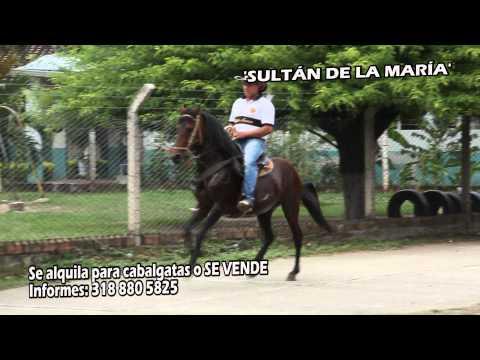 En Roldanillo, caballo 'SULTÁN DE LA MARÍA' (Se alquila para cabalgatas o SE VENDE)
