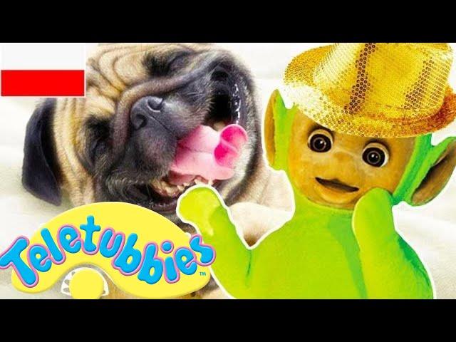 Teletubisie Po Polsku - 77 DOBRA JAKOŚĆ (Pełny odcinek) | Bajki dla dzieci
