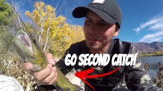 1 MINUTE CATCH: catching brown trout in one minute