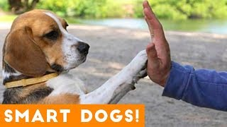 Good Dogs and Smart Puppies Compilation 2018 | Funny Pet Videos