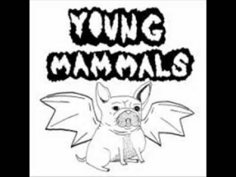 Young Mammals - Mosquitobot
