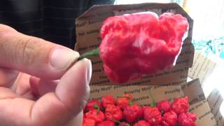 Chile Beast Bakers Peppers Unboxing