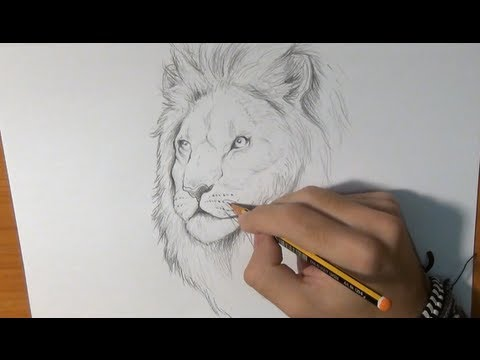 Dibujar un león real - Draw a Lion