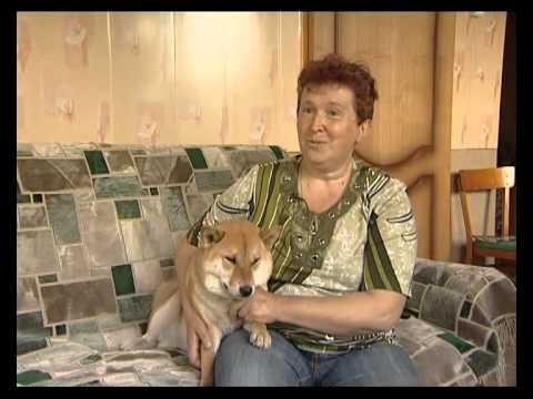 Сиба (Shiba-inu) Шиба Ину. Рассказ о японской породе заводчицей питомника Акулова гора.