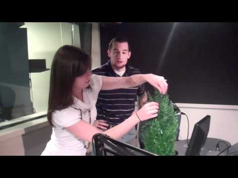 Decorating The Gibson Radio Christmas Tree