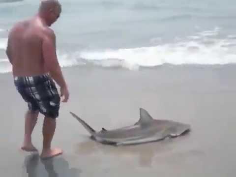 как поймать акулу на удочку