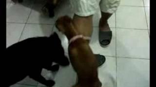 Dog Malibog