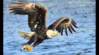 Wildlife photography on bald eagles at Mississippi River, Dam and Lock 14 near Le Clair, IA, Tarmon