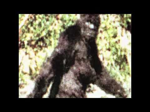 1 of 82 Patterson Gimlin best clips film(2009)  https://www.youtube.com/watch?v=FKK0LJfZ-10