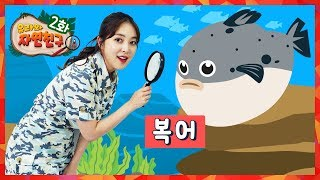Poisoned fish Blowfish sea creature Nature observation Blowfish song kids Learning