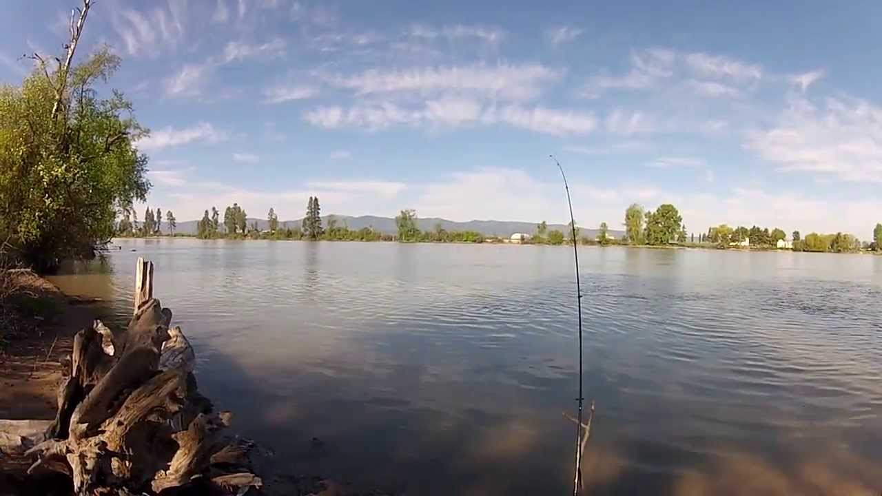 Lake trout fishing from shore on flathead river and swan for Flathead lake montana fishing