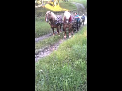 Proba de cai#tiha bargaului#armasari monta