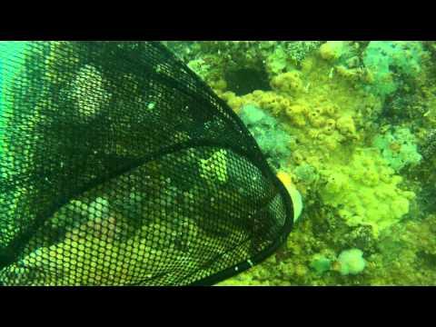 Regina Sugar Barge - Wreck Dive 4