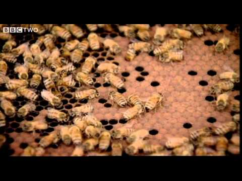 Behind the Beehive – Why Bees Use Hexagons to Build Honeycomb