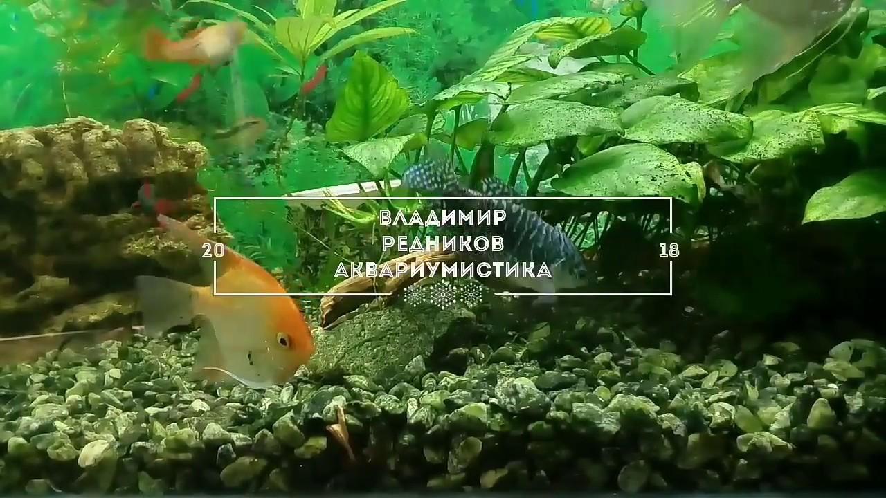 Как сажать аквариумные растения без корней 1