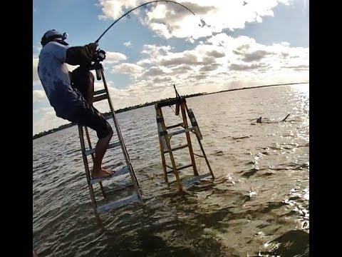 Ladder Shark Fishing