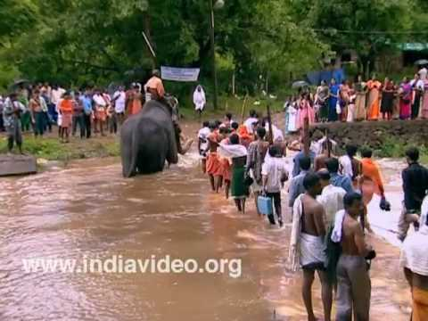 Elephant crossing Bavali river, Kottiyur