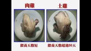 好吃雞肉怎麼挑? 土雞v.s.肉雞