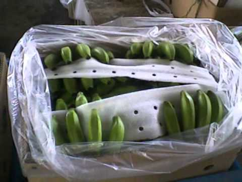 Cavendish Banana Philippines.wmv