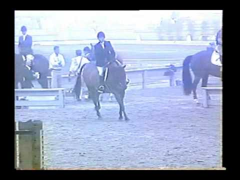 Truman showing at Saratoga and Winter Equestrian Festival Video