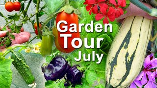 Garden Tour Tomatoes Zucchini Peppers Cucumbers Container Gardening Ground & Pot Plants Growing FOOD