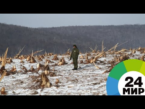 Десять тонн взрывчатки: русло реки Буреи чистят от оползня - МИР 24