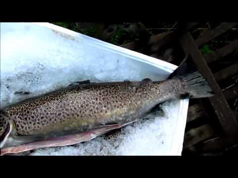 Fishing report - DENIZ ALASI FUMELEMESI  30.9.2012 Video