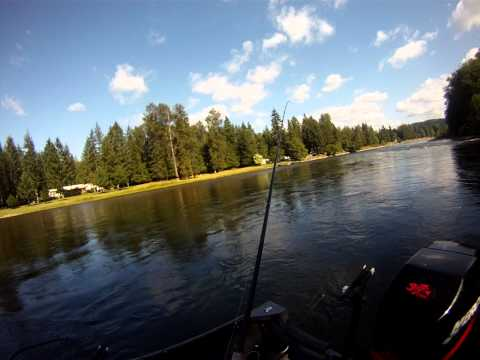 Cowlitz River Dave Fish-ON