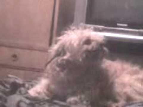 Mascota graciosa Titi y el despertador 3